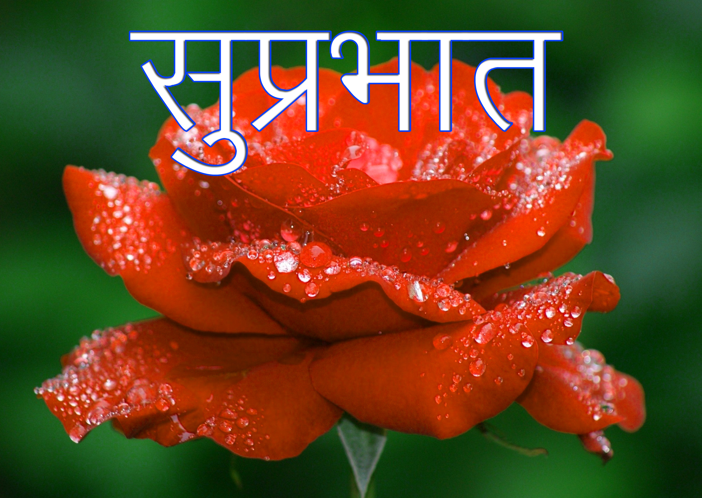 Friend-Flower-Suprabhat-Images-4