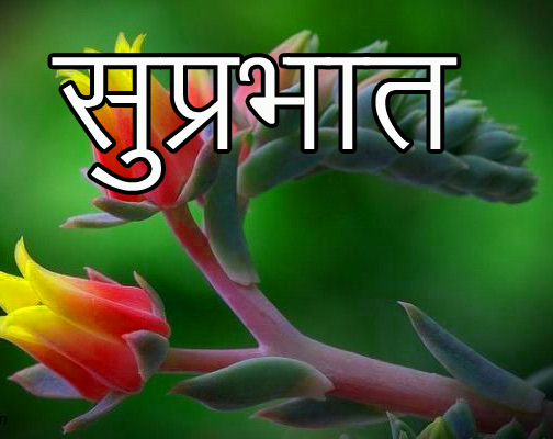 Friend-Flower-Suprabhat-Images-6