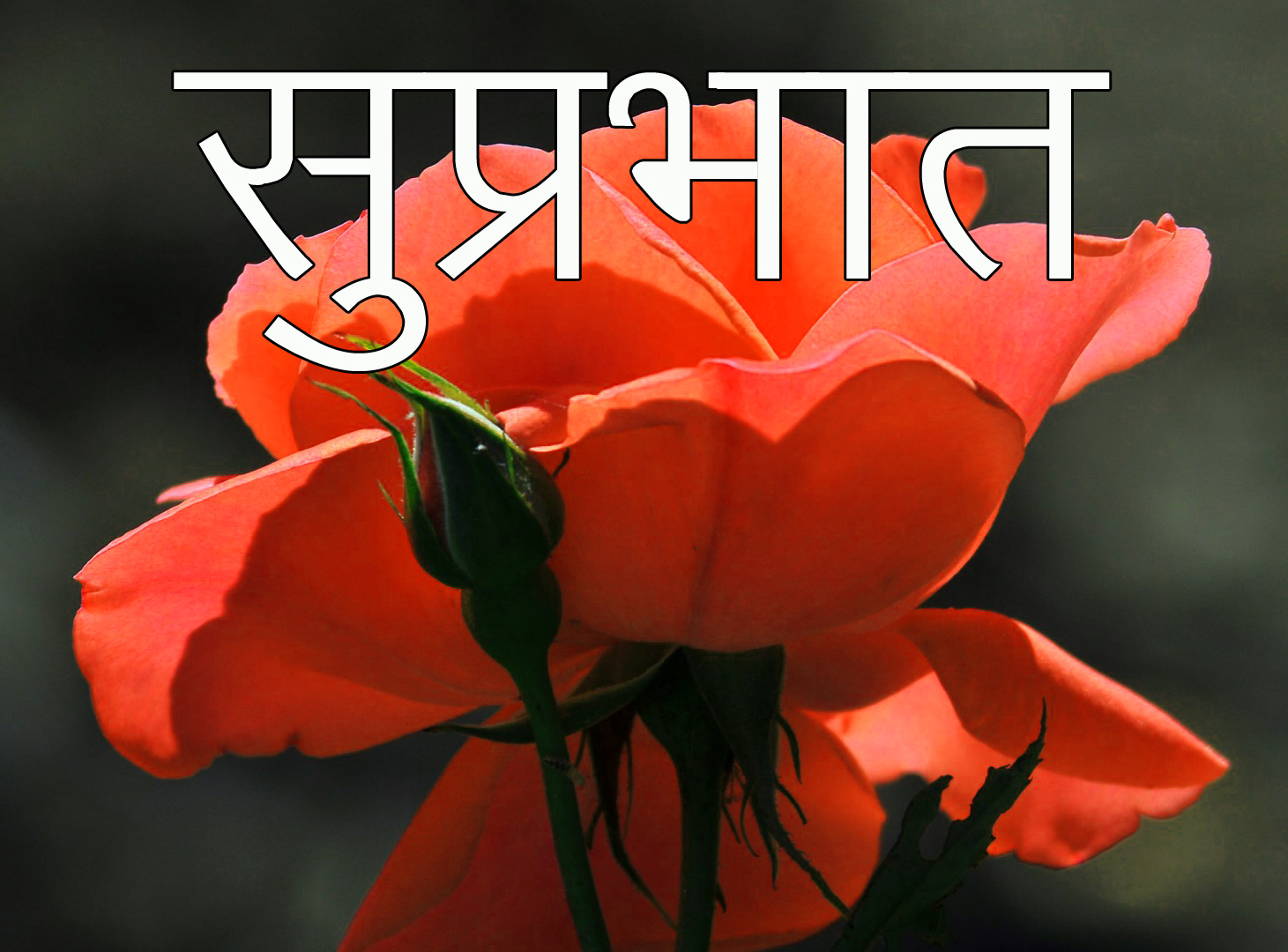 Friend-Flower-Suprabhat-Images-8