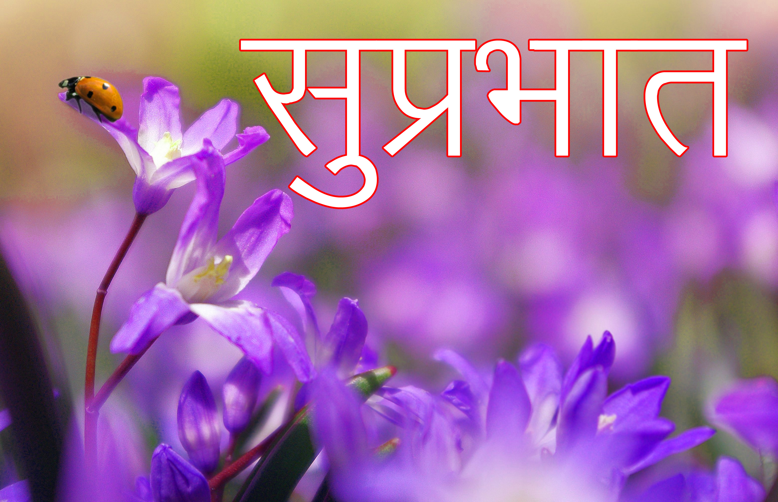 Latest-Suprabhat-Images-In-Hindi-10