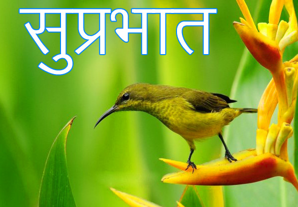 Latest-Suprabhat-Images-In-Hindi-11