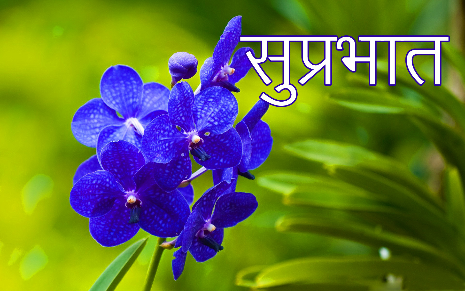 Latest-Suprabhat-Images-In-Hindi-19