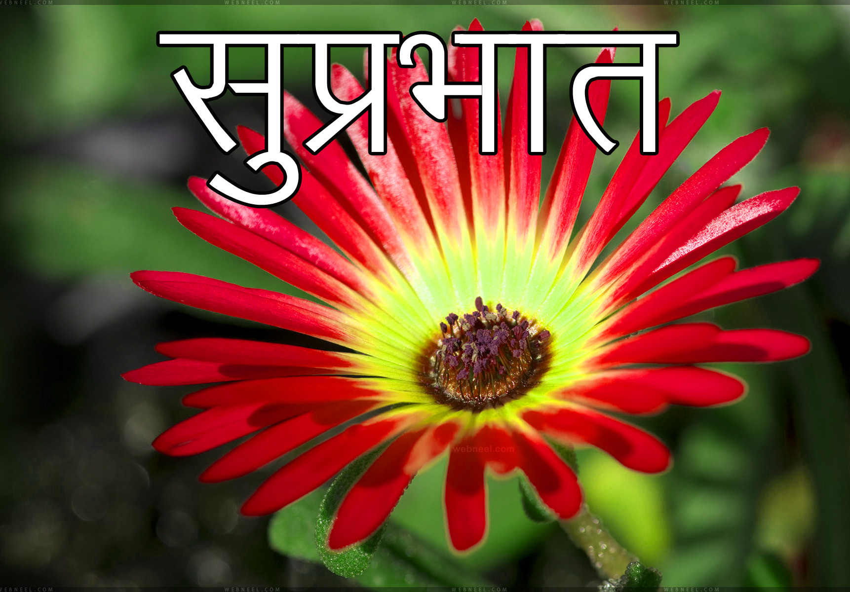 Latest-Suprabhat-Images-In-Hindi-2