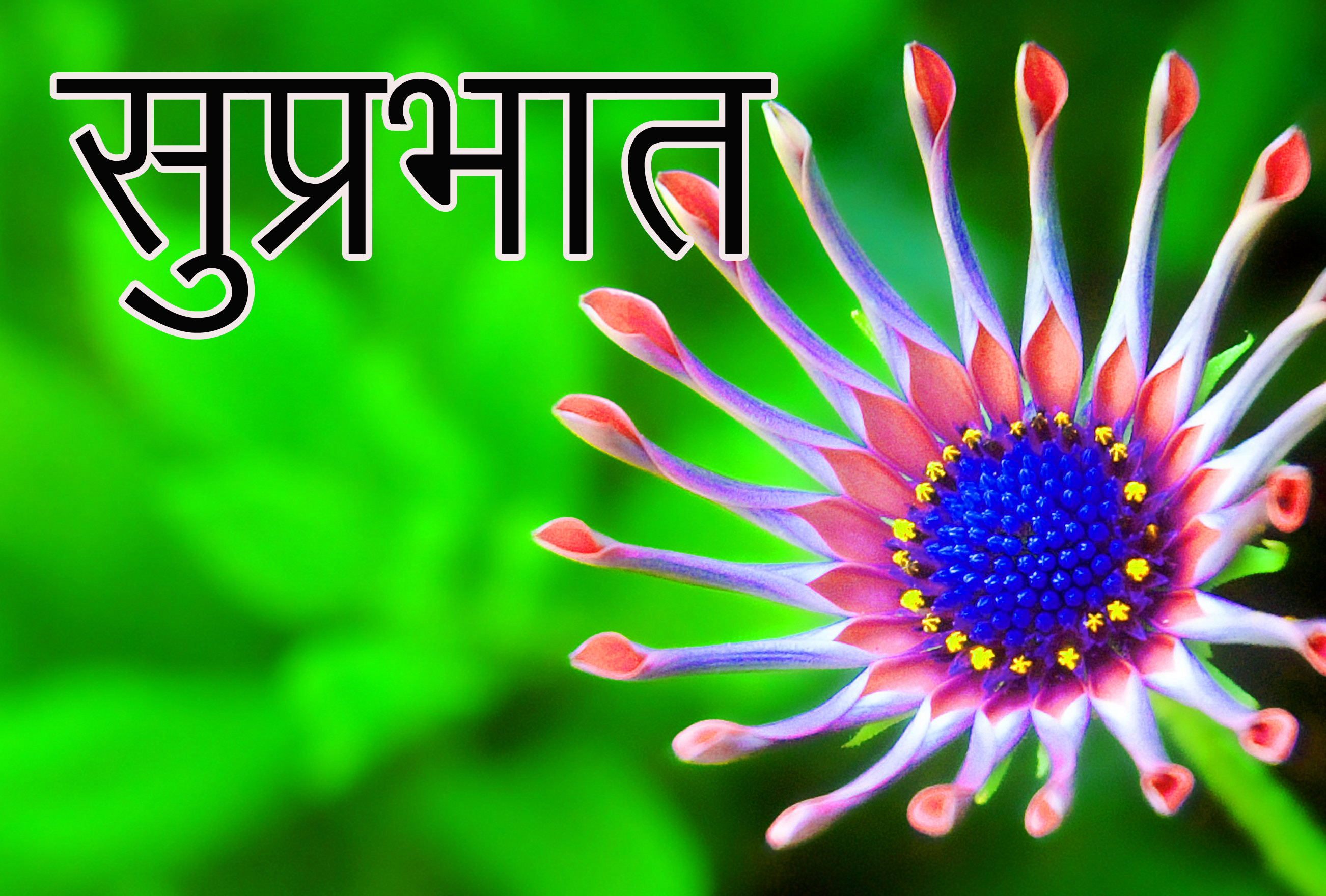 Latest-Suprabhat-Images-In-Hindi-25