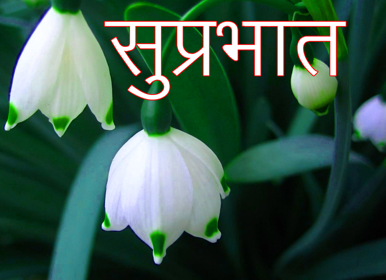 Latest-Suprabhat-Images-In-Hindi-3