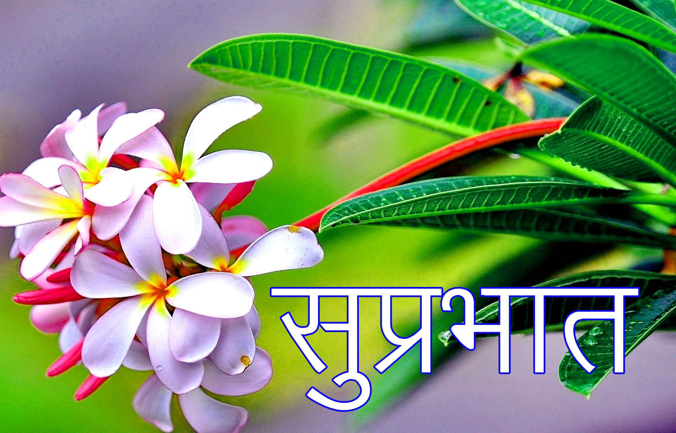 Latest-Suprabhat-Images-In-Hindi-4