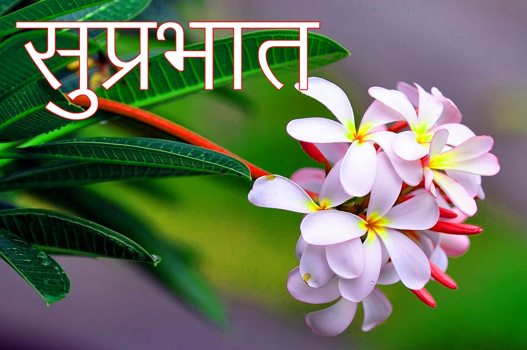 Latest-Suprabhat-Images-In-Hindi-8