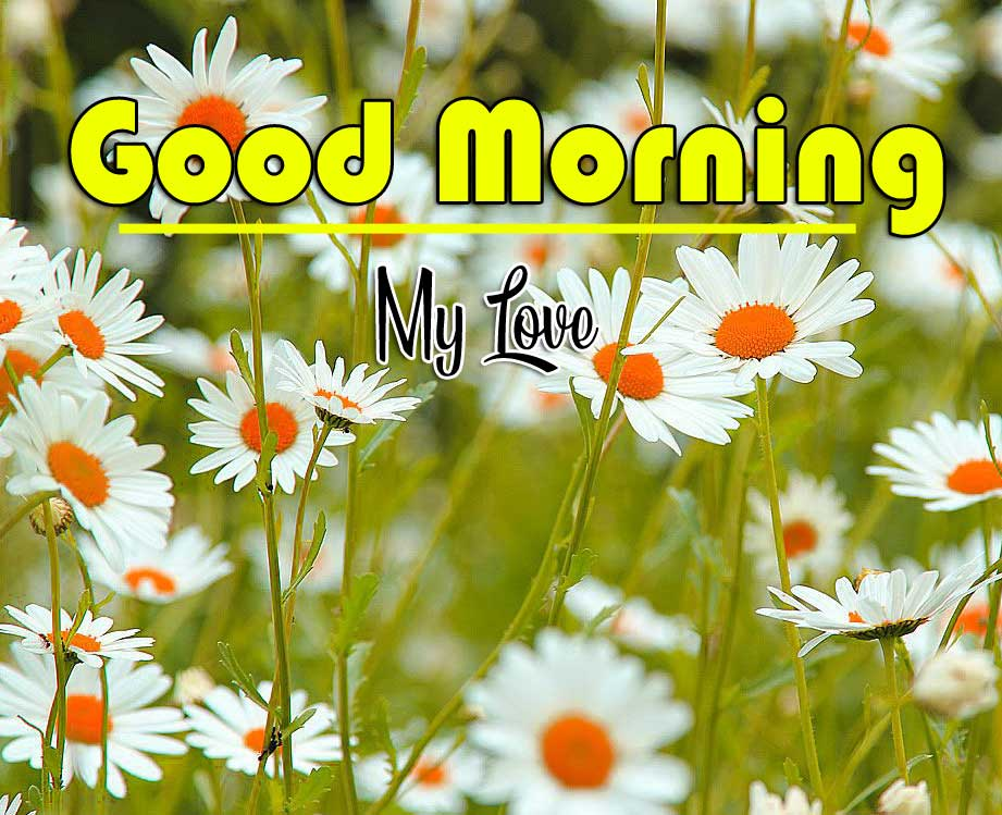 Good Morning Greetings images