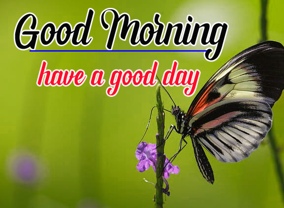 Beautiful Good Morning Images Photo Wallpaper Free