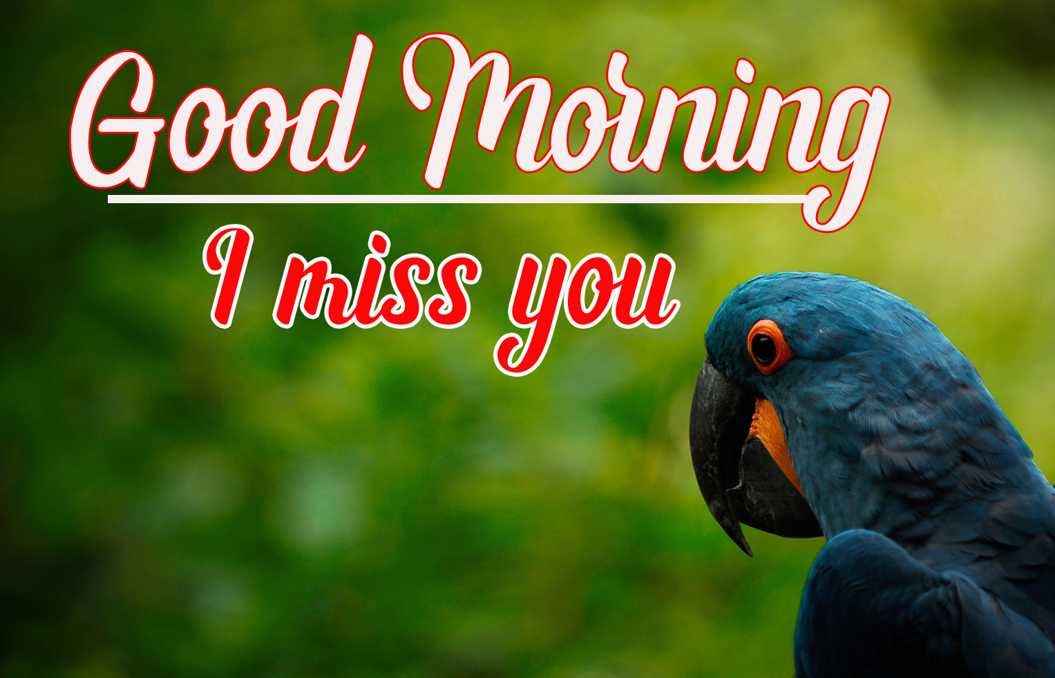 Beautiful Good Morning Images Pics Wallpaper Free Download