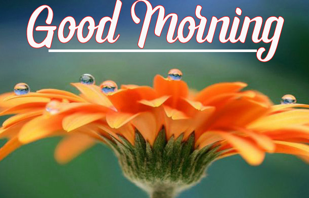 Best Quality Beautiful Good Morning Images Pics Download