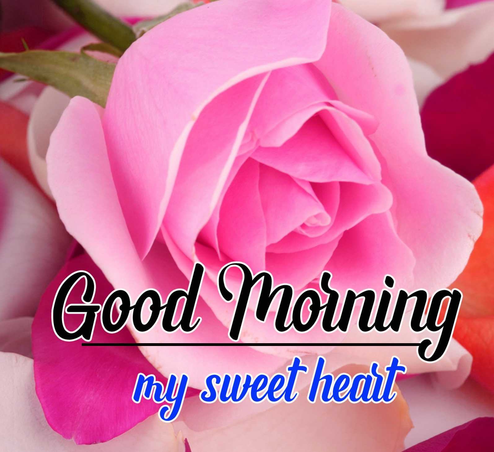 Best Sweet 1080p Good Morning Images Pics Wallpaper Download