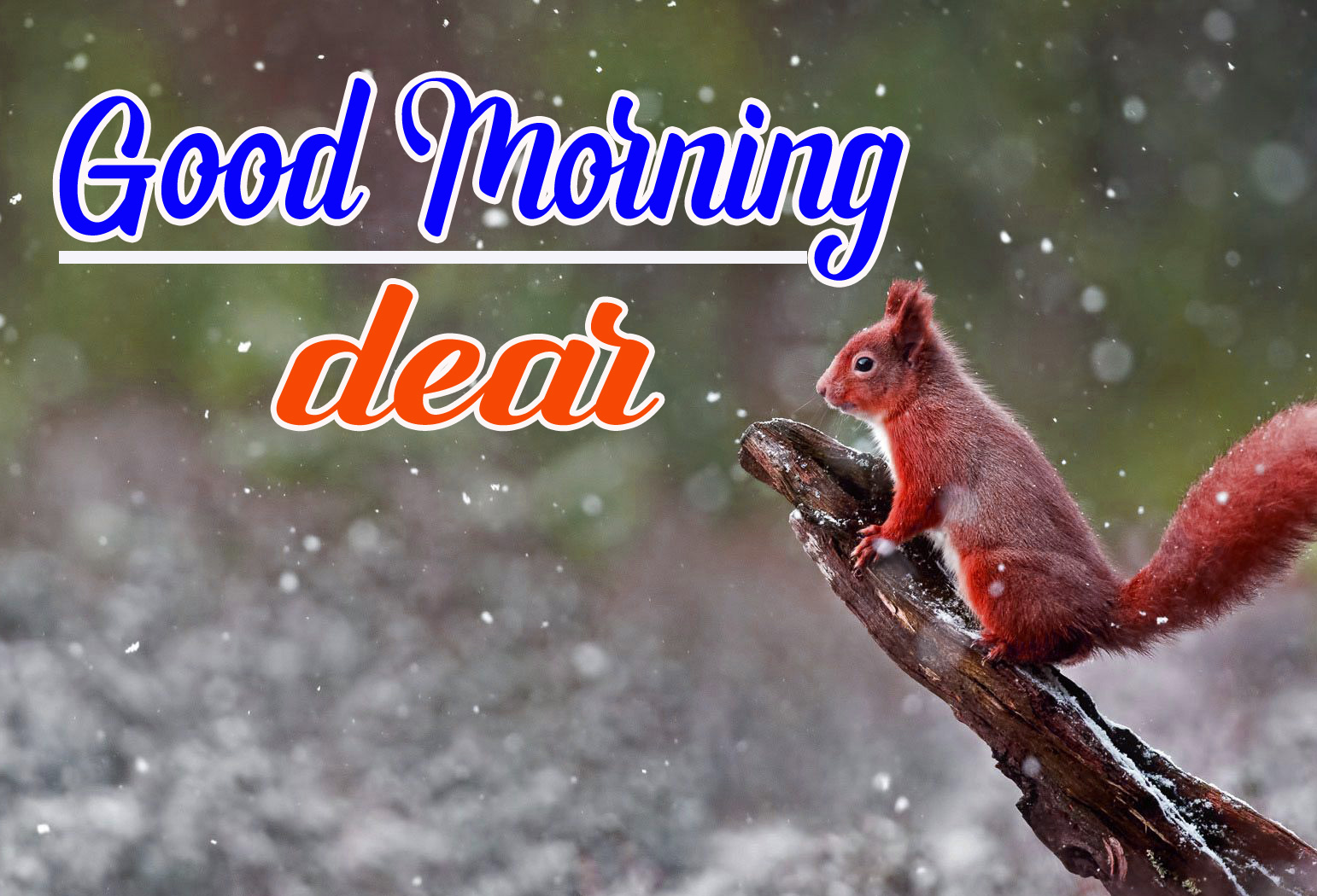 Best Sweet 1080p Good Morning Images Pics Wallpaper for Friend