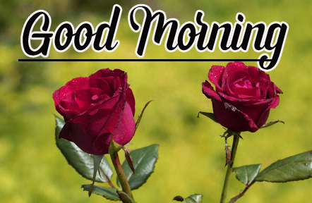 Best Sweet 1080p Good Morning Images Wallpaper pics With Rose