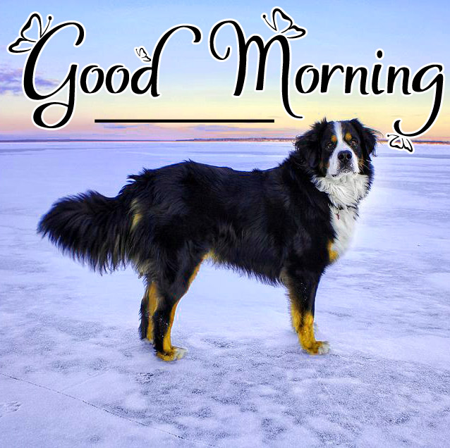 Puppy good morning Wallpaper