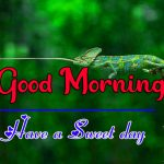Beautiful Good Morning Images Download
