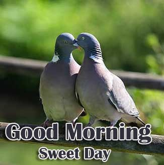 Latest Free Best Love Couple Good Morning Wishes Images