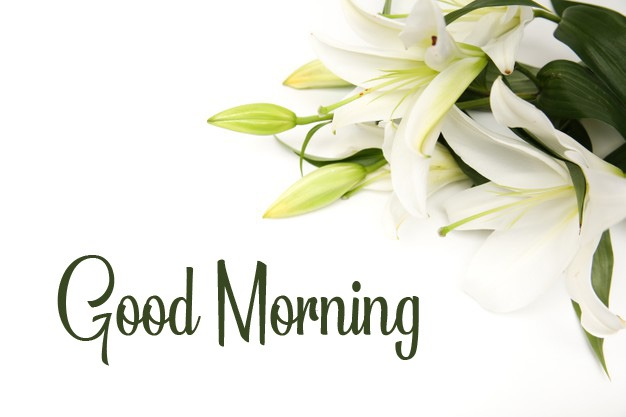 k Good Morning Pics Free for Facebook