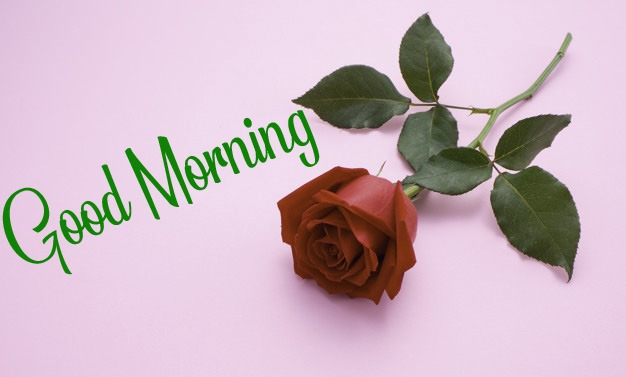 k Good Morning Pictures Free Download