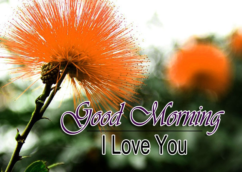 Best Quality Free Good Morning Images Pics Download