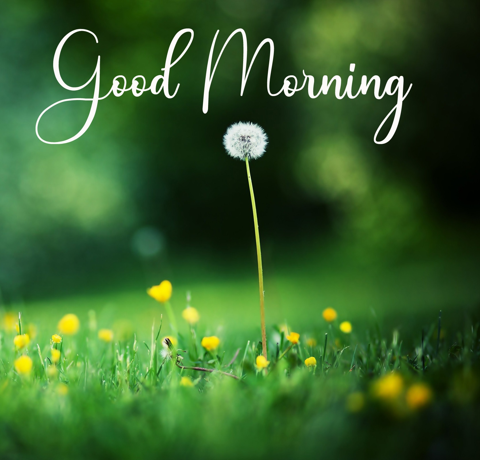 Best Quality Good Morning Pics Download