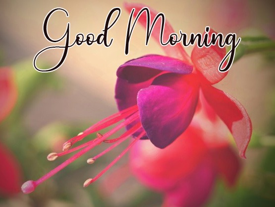 Best Quality HD Good Morning Images Download