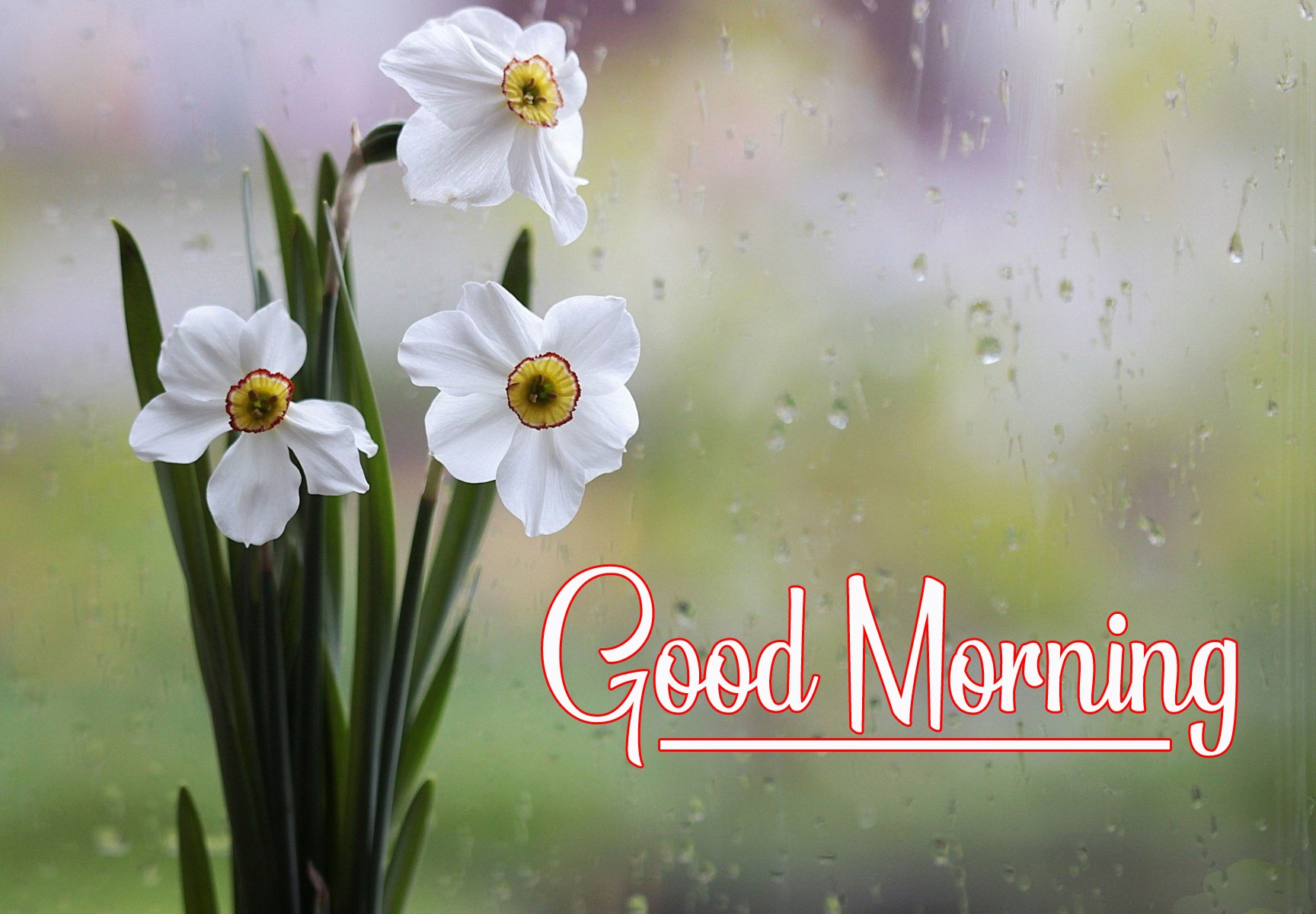 For Friend Good Morning Pics Download