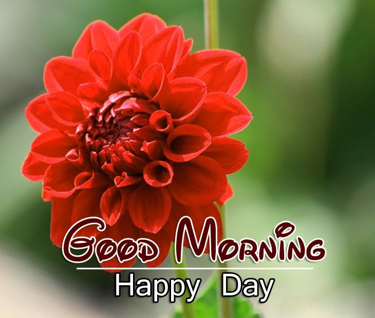 Free Good Morning Images Wallpaper Free