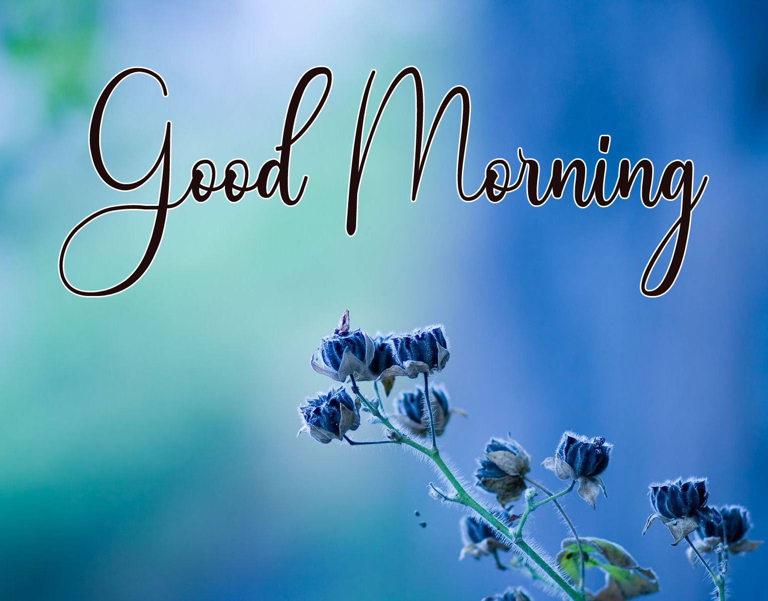 Free Good Morning Pics Download for Friend
