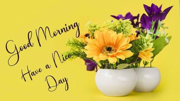 Full hd Free Good Morning Images Pics Download