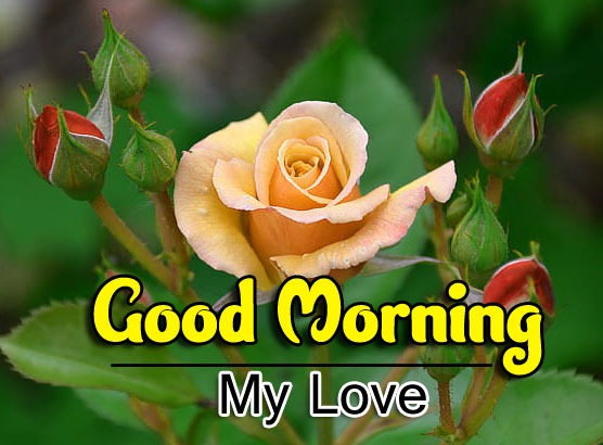 Good Morning Images Wallpaper Dowload