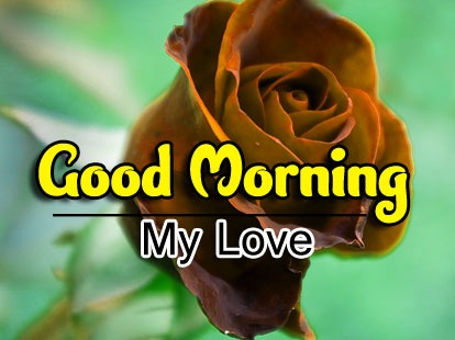 Good Morning Images Wallpaper New Download