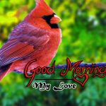 bird good morning images photo download