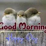 bird good morning images photo hd