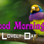 bird good morning images photo pics download