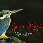 bird good morning images photo pics hd