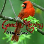 bird good morning images photo pictures download