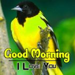 bird good morning images pics download