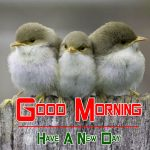 bird good morning images pics photo download