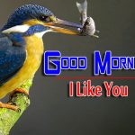 bird good morning images pics photo free hd download