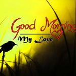 bird good morning images pics photo hd