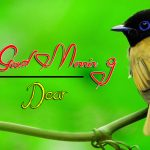 bird good morning images pictures download
