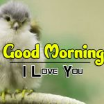 bird good morning images pictures free hd