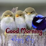 bird good morning images wallpaper download