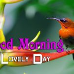 bird good morning images wallpaper free download