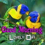 bird good morning images wallpaper free hd