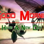 butterfly good morning images pics for hd