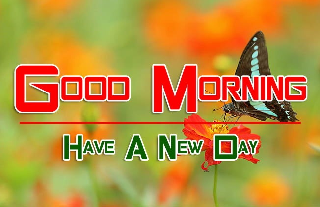 252+ Butterfly Good Morning Wishes Images Pics HD Download