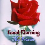 latest rose Good Morning Images photo download
