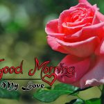 latest rose Good Morning Images pics download